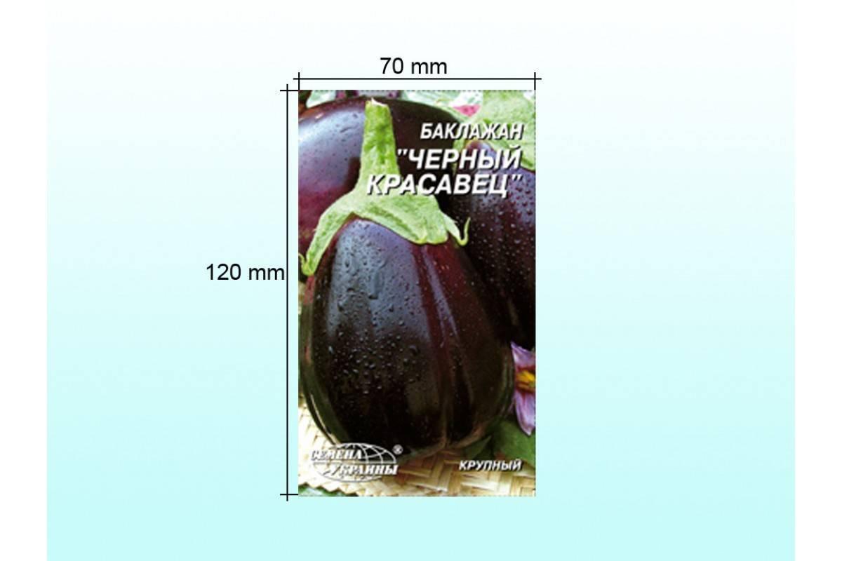 Правила выращивания баклажана черный красавец, описание сорта