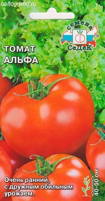 Описание сорта помидоров альфа