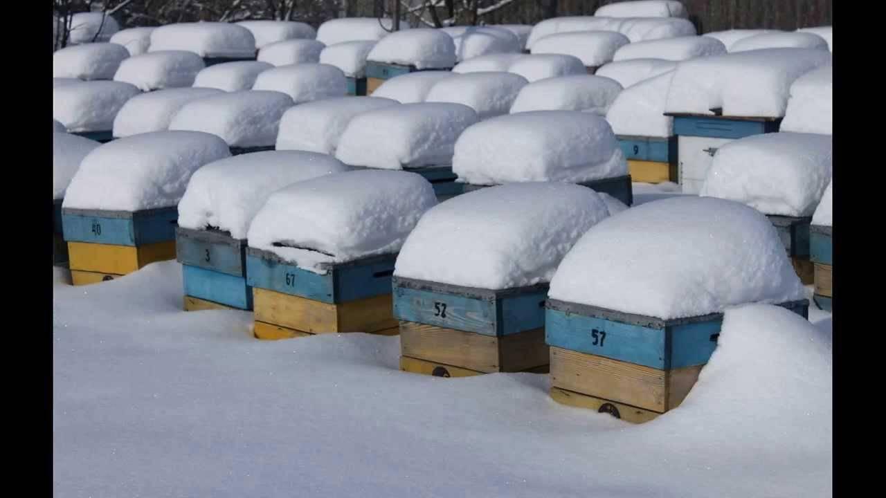 Качественные и надежные методы утепления ульев