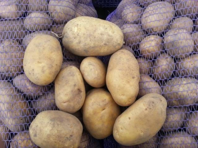 Картофель зорачка