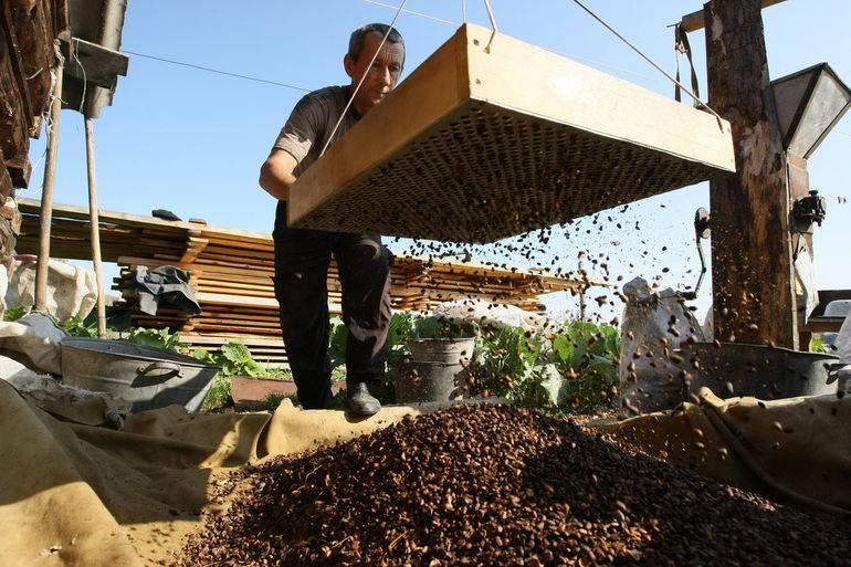 Кедровые орешки: полезные свойства и советы экспертов
