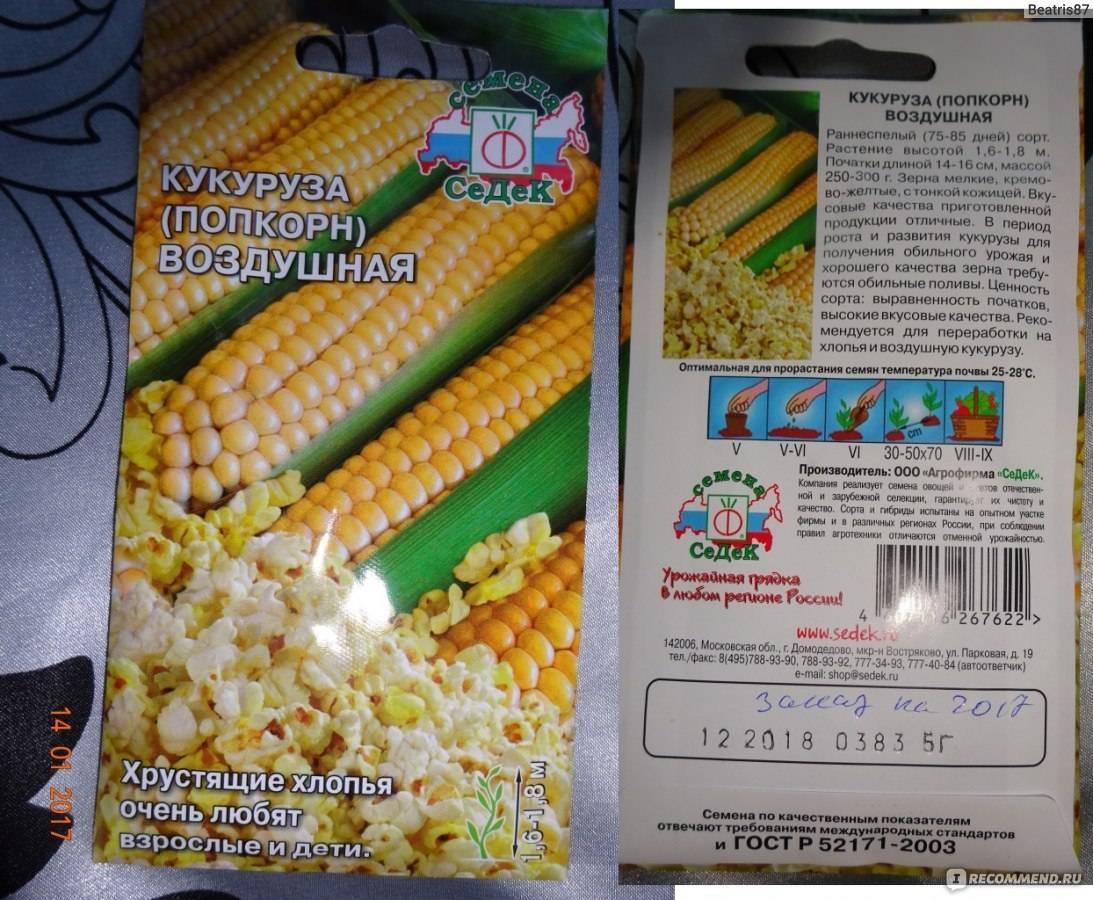 Лучшие сорта кукурузы для посадки на даче | весьогород.ру