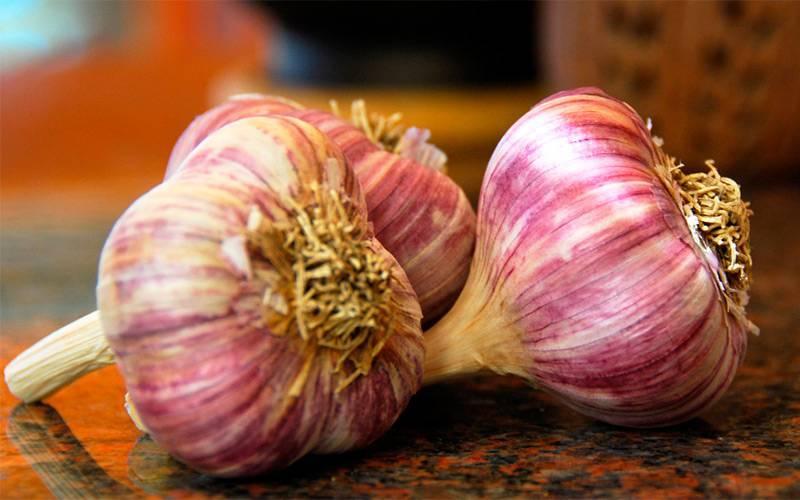 Сорта чеснока - описание, особенности выращивания и отзывы