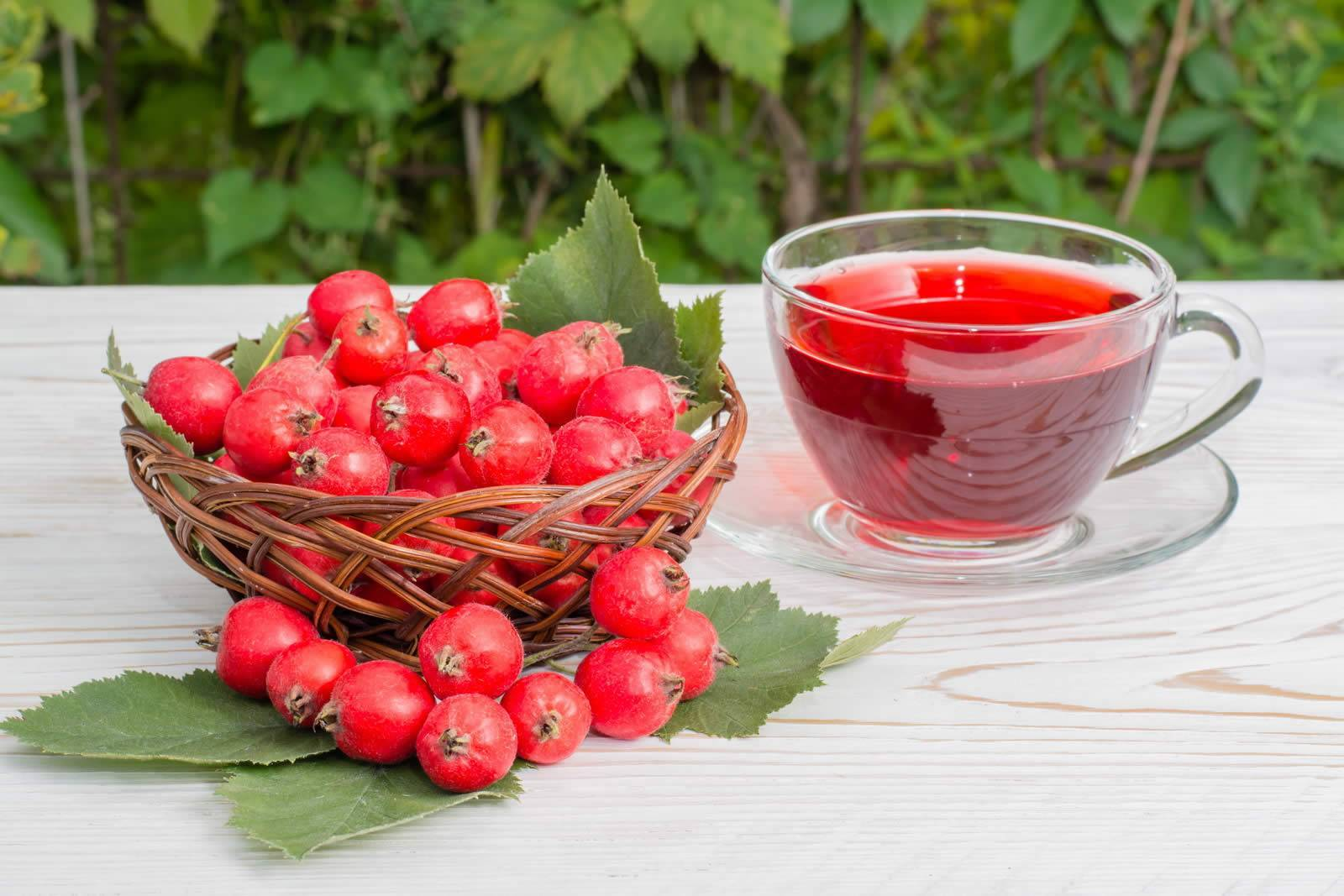 Боярышник — удивительный кустарник из сибири с лечебными и декоративными свойствами