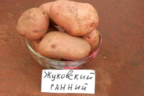 Ранний картофель жуковский: характеристика, сроки созревания, отзывы
