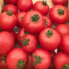 Подробное описание и характеристики сорта томата санрайз