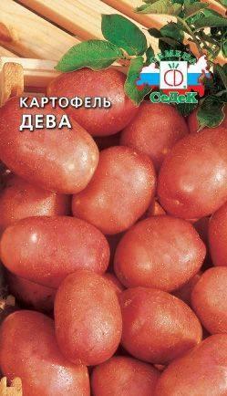 Дарующий небывалое удовольствие каждому огороднику — картофель отрада: описание сорта, отзывы