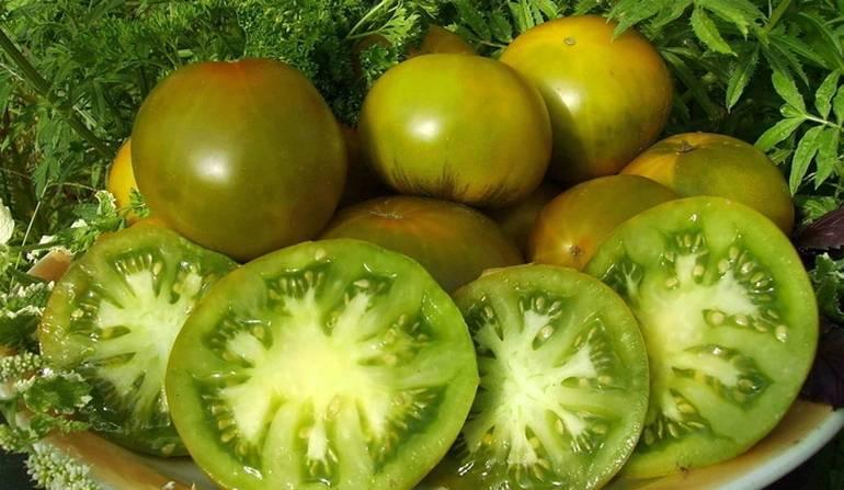 Сорт помидоров болото: отзывы и фото