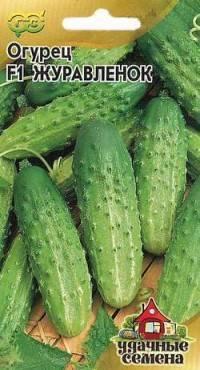 Сорт огурца журавленок: выращивание, посадка и уход, фото