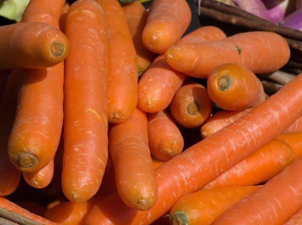 Морковь дордонь f1: описание, отзывы, урожайность