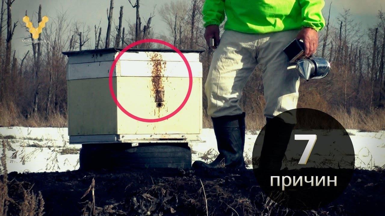 Апимакс инструкция по применению для пчел отзывы пчеловодов