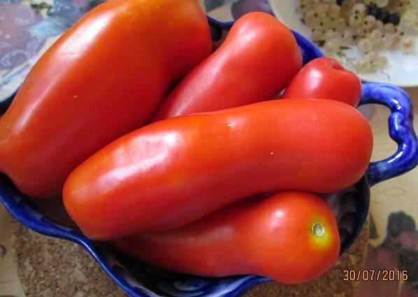 Описание экзотических томатов сорта дрова и правила выращивания