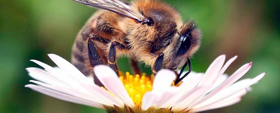 Сироп для пчел — соотношения