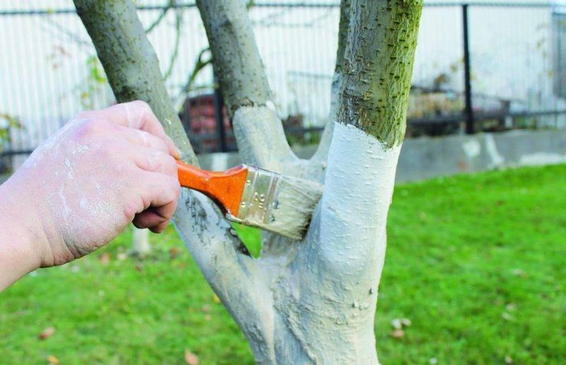 Как приготовить глиняную болтушку для малины.