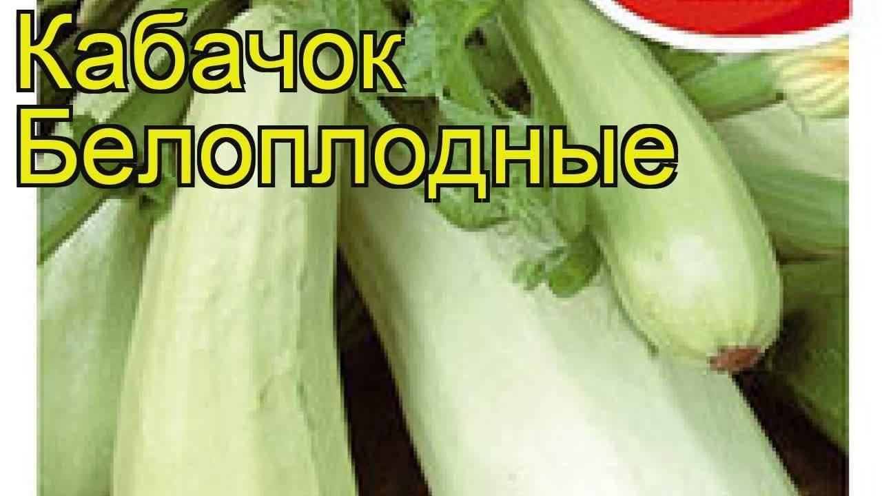 Агротехнические хитрости выращивания кабачка белоплодного