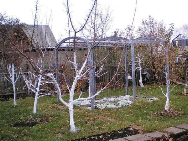 Обработка сада осенью от вредителей и болезней: осеннее искореняющее опрыскивание плодовых деревьев и ягодных кустарников