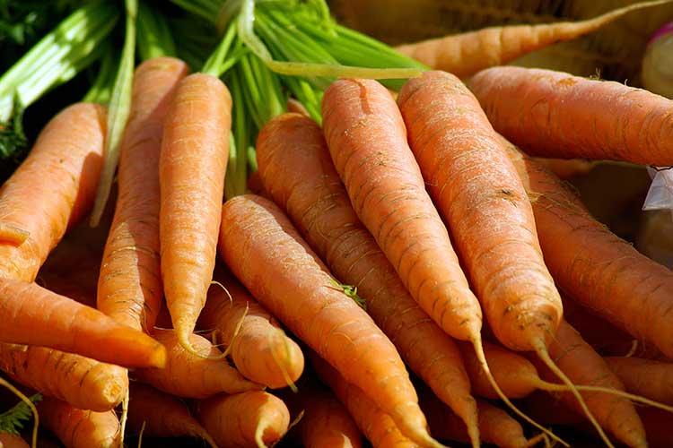 Лучшие сорта моркови с сердцевиной и без: какие хорошие виды семян овоща есть для открытого грунта и описание, характеристика и фото корнеплодов всех этих типов
