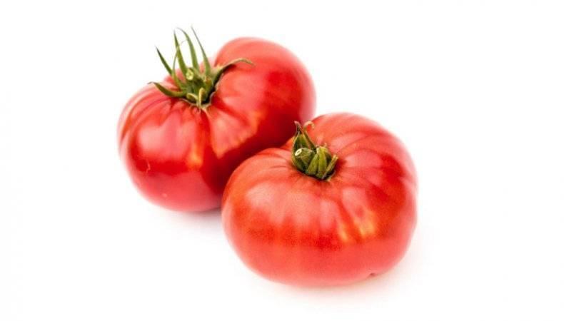 Выращивание томата гордость застолья