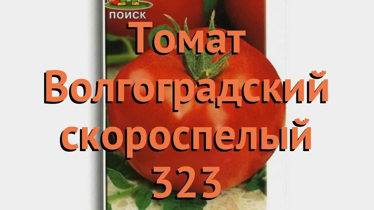 Описание и выращивание «волгоградских» томатов