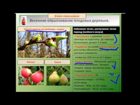 Обработка плодовых деревьев и кустарников весной в саду от вредителей: чем опрыскивать деревья