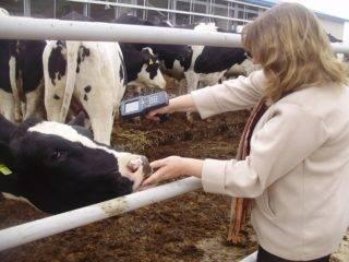 Паратуберкулез у животных (у коров, у крс, у овц, у коз): возбудитель болезни, течение и симптомы, диагноз, иммунитет, лечение, меры борьбы.  |  ветеринарная служба владимирской области