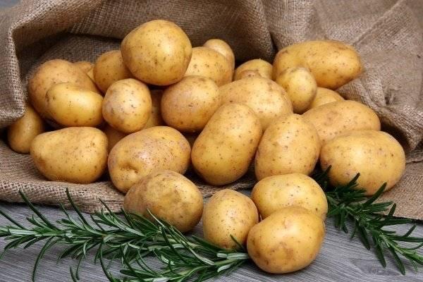 Ультраранний сорт наивысшего качества — картофель джувел: описание и советы по выращиванию
