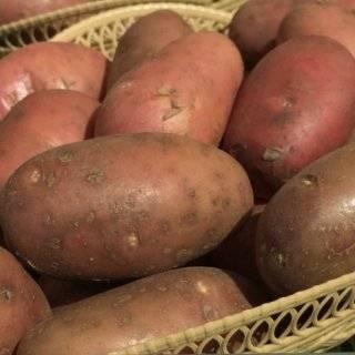 Картофель джура описание сорта фото отзывы