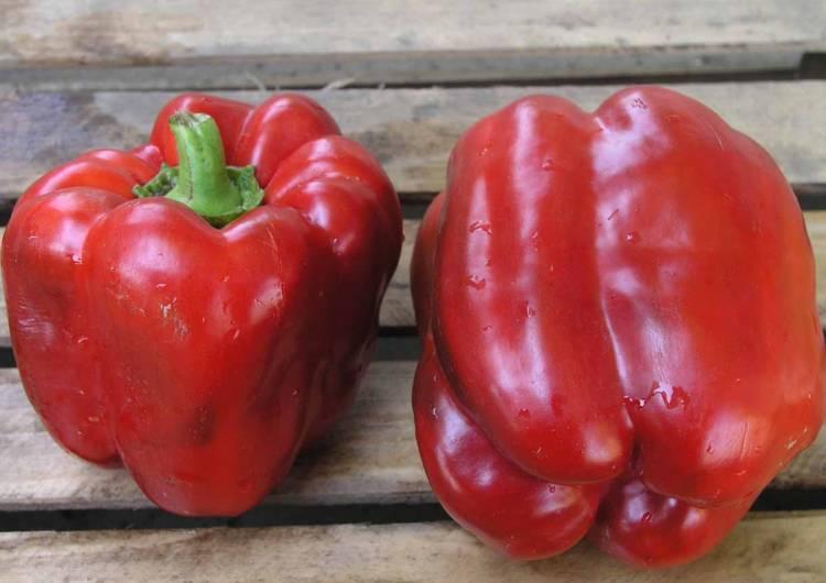 Нарядные плоды с универсальным использованием — перец тоша: отзывы и описание сорта