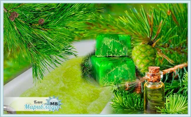 Хвоя сосны (сосновые иголки): полезные и лечебные свойства, применение и противопоказания