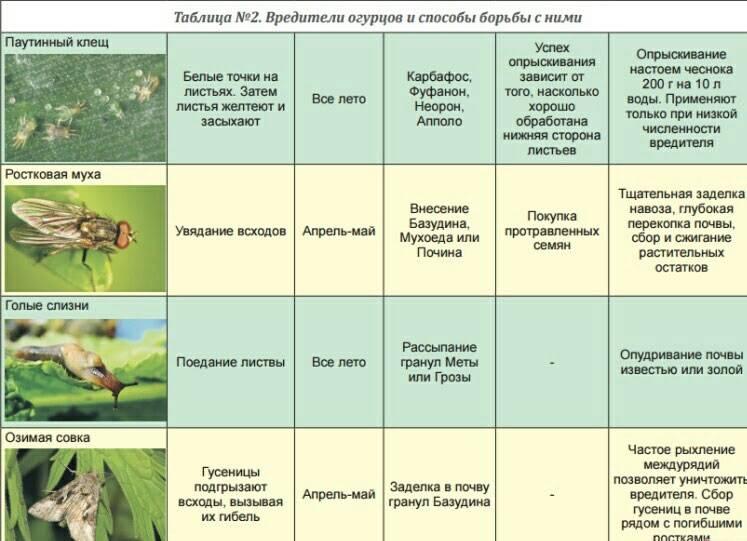 Вредители огурцов — описание и меры борьбы