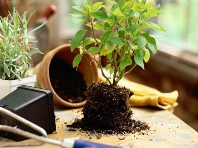 Подкормка комнатных растений подручными средствами