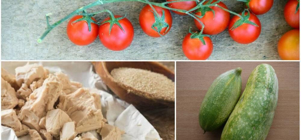 Подкормка дрожжами: помидоры и огурцы, рецепт