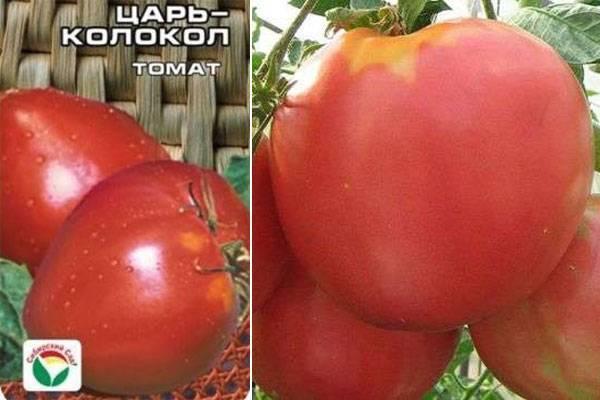 Томат царь колокол: характеристика и урожайность сорта