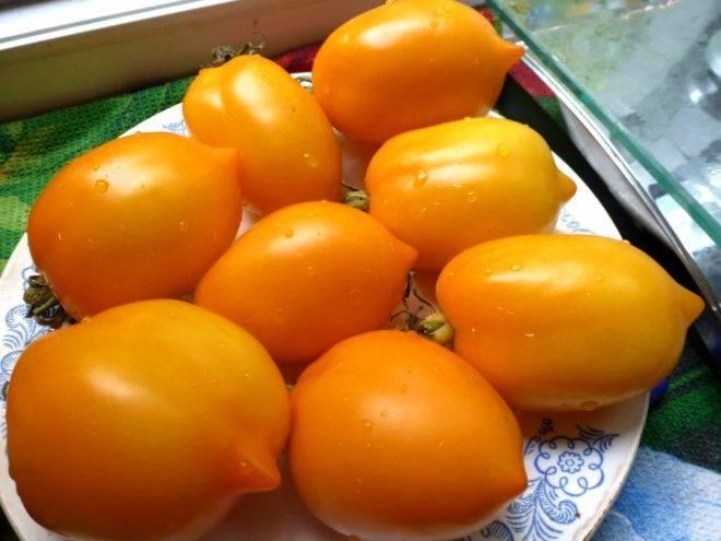 Фото, отзывы, описание, характеристика, урожайность сорта томата «сладкое чудо»