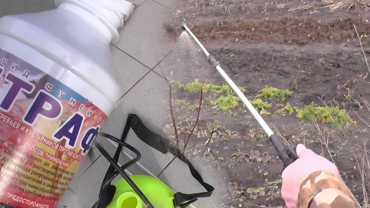 Препарат Днок для опрыскивания и обработки сада, отзывы