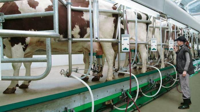 Дойка для коров