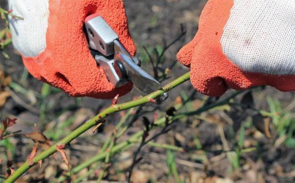 Флоксы уход осенью после цветения.