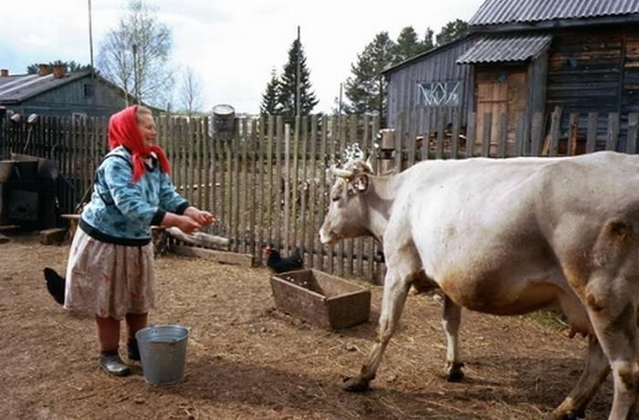 Диарея у коровы: лечение в домашних условиях