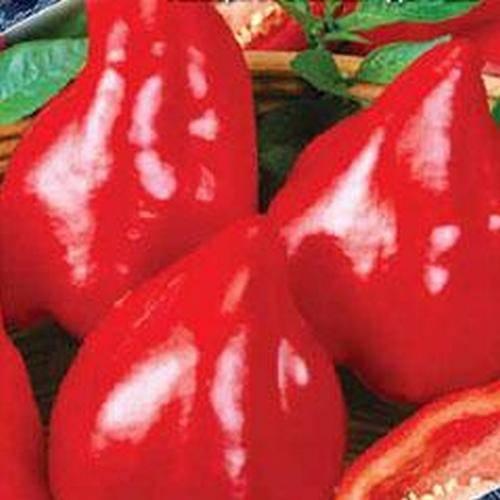 Сорт помидор золотое бычье сердце