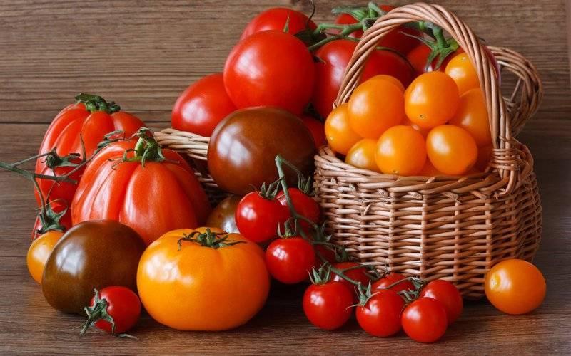 Все, что нужно знать о том, когда сажать помидоры на рассаду в домашних условиях
