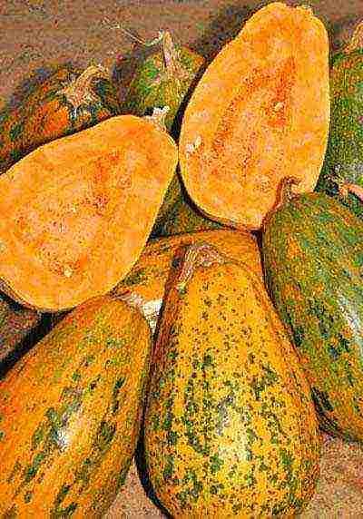 Обзор и преимущества сортов кустовой тыквы