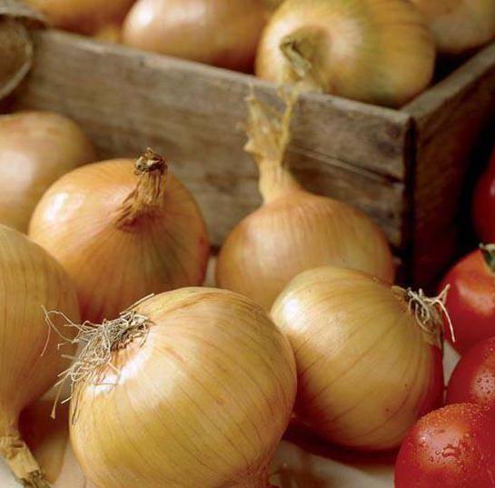 Лук «геркулес» — описание характеристик. посадка, уход и выращивание репчатого сорта f1 из семян и севка (фото)