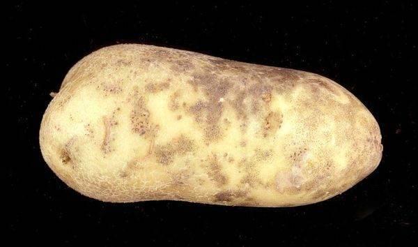Хранение картофеля – как на зиму сохранить собранный урожай