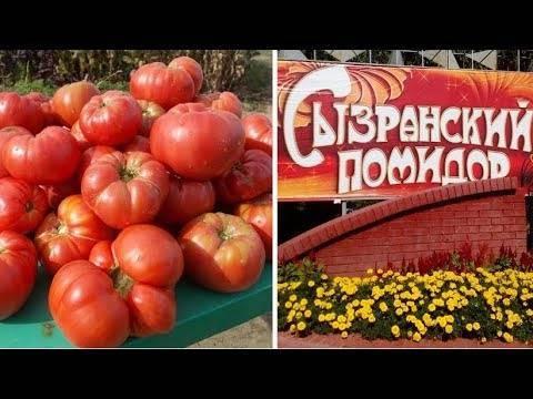 Сызранская пипочка томат описание
