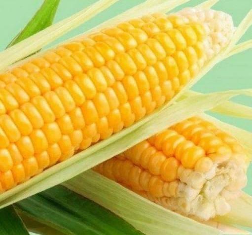 Выращивание сахарной кукурузы, описание сортов, и правила ухода