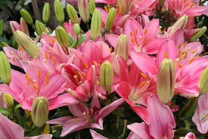 Чем подкормить тюльпаны весной и после цветения