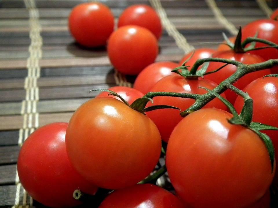 Лучшие сорта томатов для северо-запада