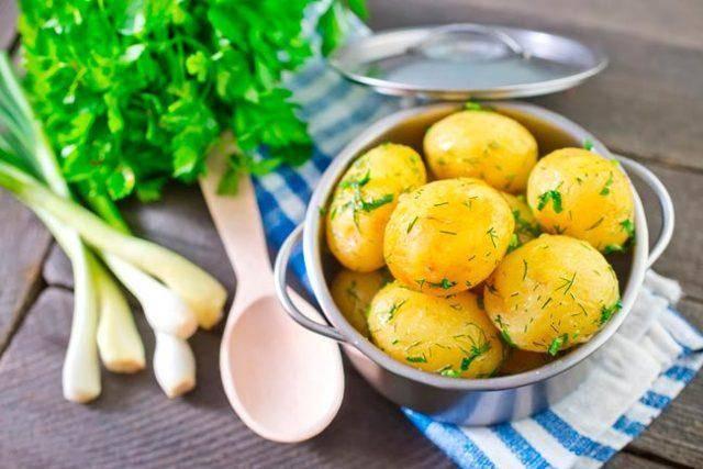 Картофель «импала»: описание сорта, посадка, уход и выращивание