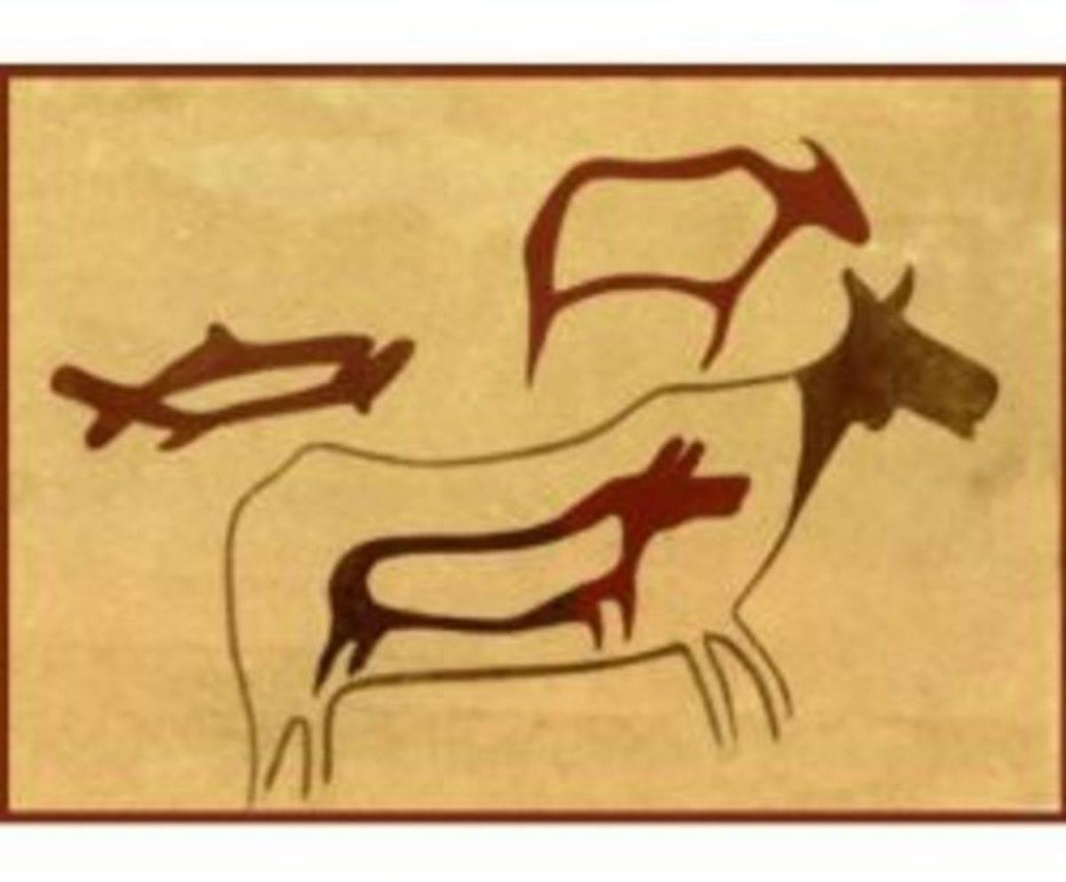 Стельность коровы   признаки стельности   определение стельности коровы