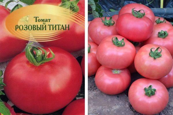 Томат титаник: характеристика и описание сорта, урожайность с фото